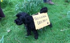 dog-brexit